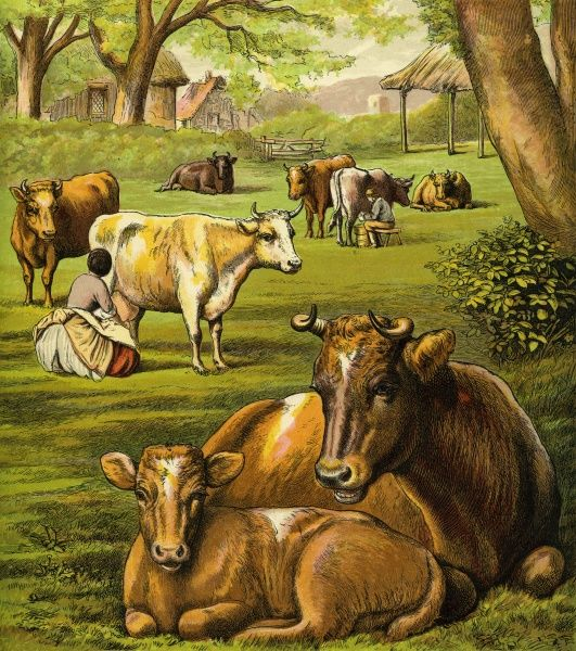 Victorian Farmyard (The cows). The cattle in the pasture with a maid milking a cow. Unattributed illustrator Date: circa 1870