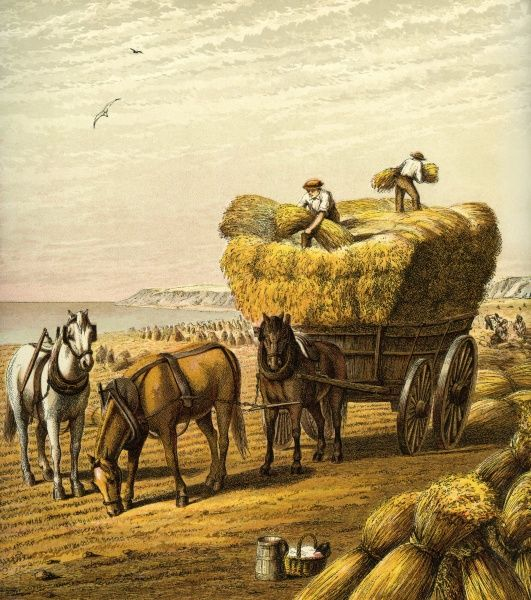 Victorian Farmyard (The harvest). Workers on a coastal field carefully load the precious corn on to a cart while women tie up the sheaves. Unattributed illustrator Date: circa 1870