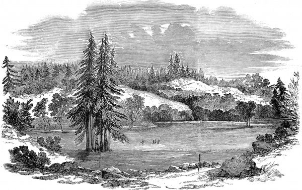 Engraving showing a beautiful wooded landscape with pines, fishermen and hills, near Russian River, 100 miles North-West of San Francisco, California, 1851