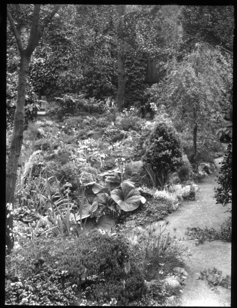 A view of Reginald Malby's garden in summer (August), with various flowers, shrubs and trees