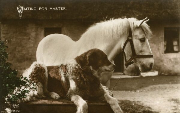 A Lovely white horse and a faithful hound await the return of their master, possibly from a hard day's toil in the fields. Date: circa 1904