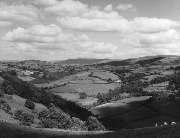 A fine panoramic view of the Carmarthenshire countryside, from Carreg Cennan Castle, South Wales. Date: 1950s