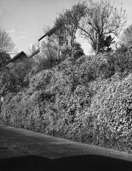 A high-banked country lane near Penarth, Glamorgan, Wales. Date: 1950s