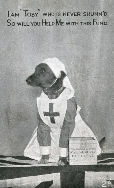 A small dog dressed up as a nurse atop a Union Jack and next to a collecting tin for the Woolwich & District War Memorial Hospital Fund. 'Toby' is never shunn'd when asking! Date: early 20th century