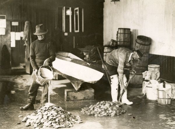 OYSTER INDUSTRY - fishermen washing oysters Date: 1930