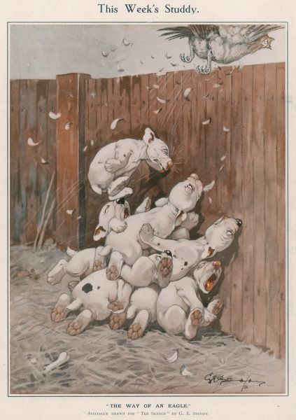 A litter of enthusiastic but accident-prone puppies crash into a fence and fall in a heap on top of one another after chasing a chicken across a farm yard. Credit line must read: Estate of George Studdy/Gresham Marketing Ltd./Mary Evans