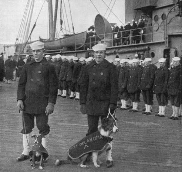 Wearing the chevrons of honor for services overseas. Two dogs wearing coats with chevron symbols on, with there handlers are paraded before the troops aboard a US naval ship Date: 20th century