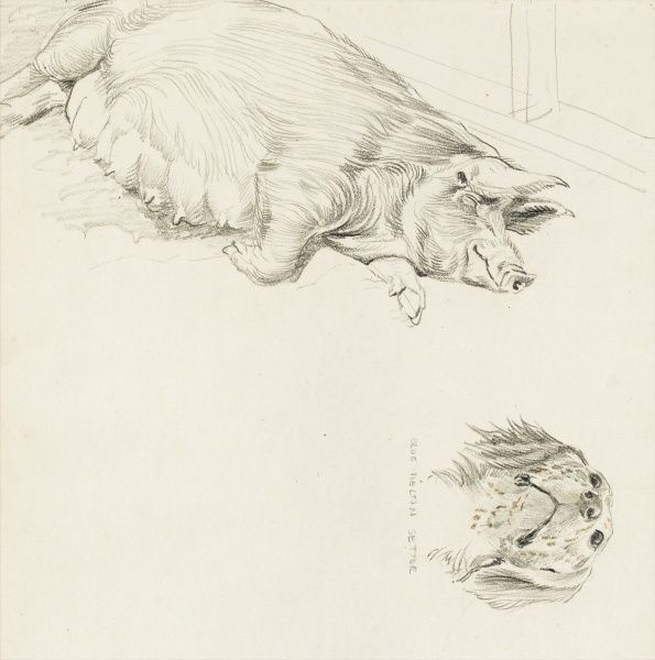 Wessex saddleback sow and a Blue Belton Setter Dog. Pencil studies by Raymond Sheppard