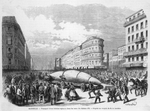Transporting a captured whale through the streets of Marseille on a trolley. The whale was caught in the waters of the Chateau d'If
