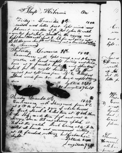 A hand-written entry into a whaling log book, including ink drawings of whales
