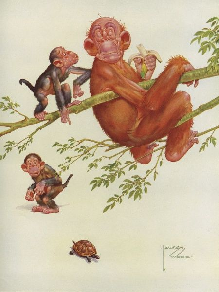 Illustration by Lawson Wood featuring his creation, the wily orang-utan, Granpop nonchalantly sitting in the branches of a tree eating a banana and ignoring the excited chatter of two little monkeys who point out a passing tortoise