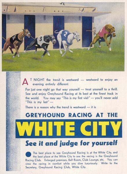 Advert for White City greyhound racing stadium depicting four greyhounds zooming out of the traps and advertising the stadium's various amenities including ballroom, club lounge and luxurious dining