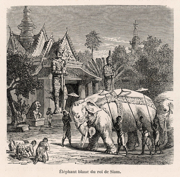 The white elephants of the kings of Siam (Thailand) are venerated by people who happen to encounter them