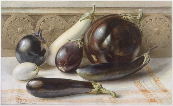 A still life of purple and white aubergines (or egg plants) displayed on a cloth