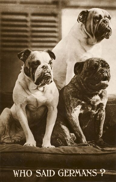 Who Said Germans? - Patriotic Bulldogs in defiant pose against the Kaiser