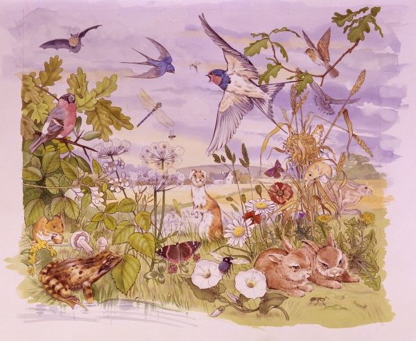 Countryside wildlife scene, with a variety of different animals, insects, plants and birds