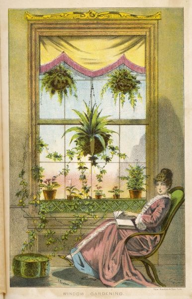 A Victorian woman sits in a comfortable armchair reading a book, proud of her verdant display of plants decorating a large window