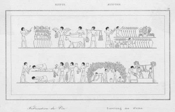 Ancient Egyptian wine cultivation