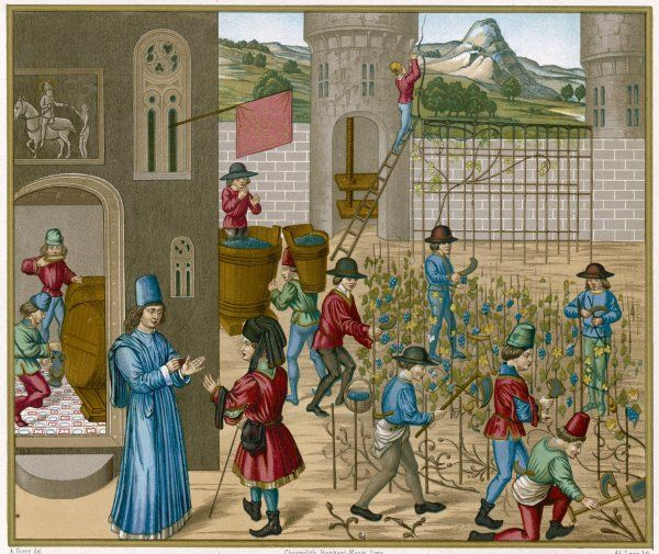 The cultivation and fabrication of wine at a medieval French chateau