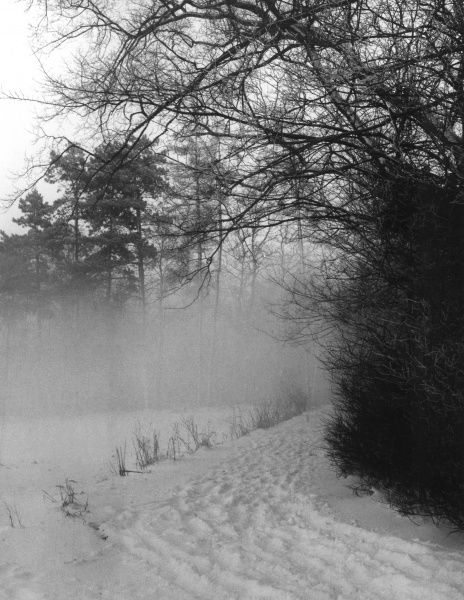A winter scene on a bridle path, showing fog rising among the trees after a fall of snow. Date: 1960s