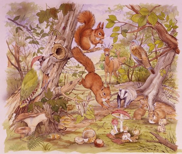 Woodland scene with a multitude of animals and birds