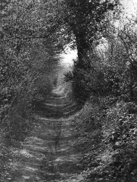 The sunken trackway approaching Goldings Wood, Hertfordshire, England, which acts as a parish boundary between Great Amwell and Stanstead St. Margaret's. Date: 1930s