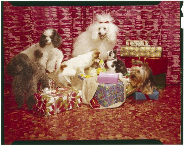 Pampered pets with their Christmas presents!