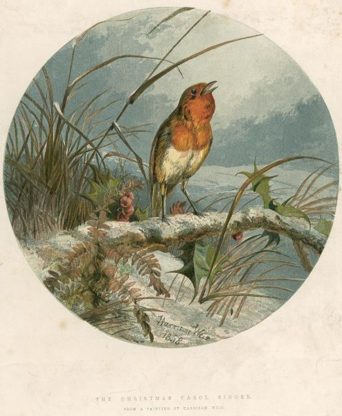 Christmas Robin. Weir started working for the ILN in 1847 and was still submitting illustrations at the turn of the century, the paper's longest-serving illustrator. Weir is characterised by an extraordinary accuracy and life in his drawings