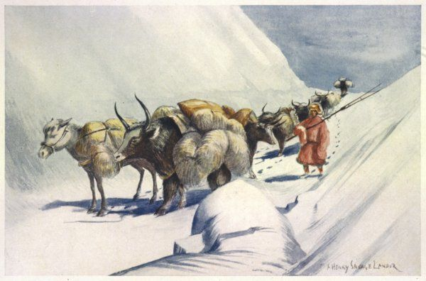 Yaks and ponies carrying wool from Tibet into India