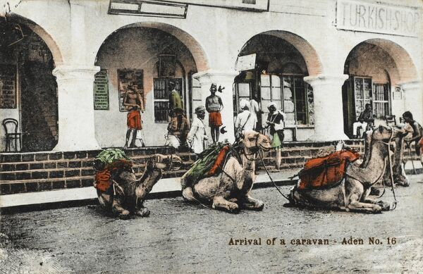 "Yemen - Arrival of a camel caravan, Aden - the animals sit outside a Turkish shop. The message on the reverse of the card reads: ""Nice little things these camels""!"