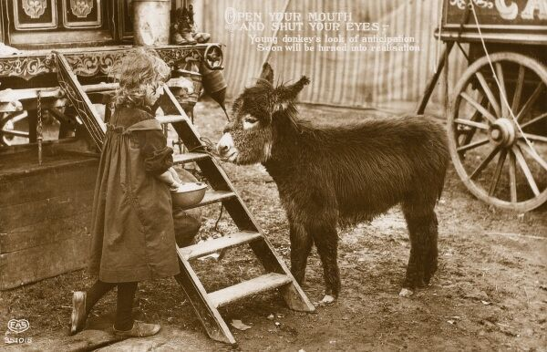 'Open your mouth and shut your eyes' - a young donkey's look of anticipation soon to be turned to realisation. A delightful sentimental postcard