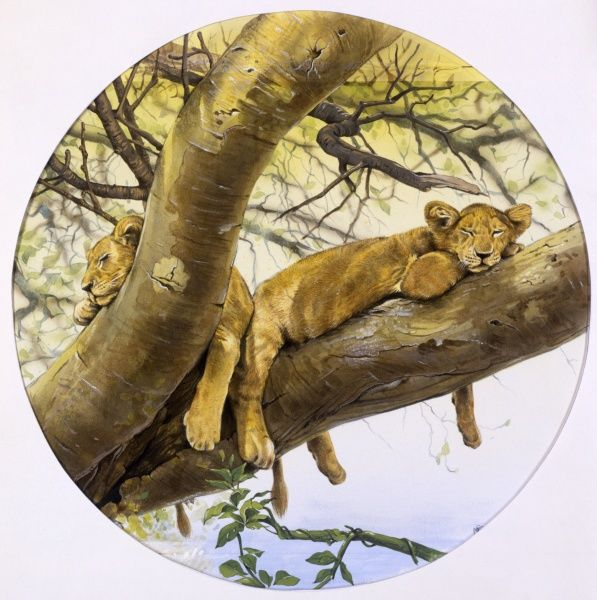 Two lion cubs (Panthera leo) asleep in the substantial lower branches of a tree in sub-Saharan Africa. Painting by Malcolm Greensmith
