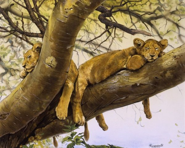 Two young lion cubs (Panthera leo) asleep in the substantial lower branches of a sub-Saharan tree. Painting by Malcolm Greensmith