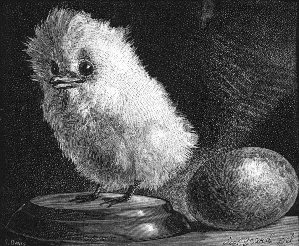 A young Tropic bird and egg in the American Museum of Natural History, 1882 Date: 1882