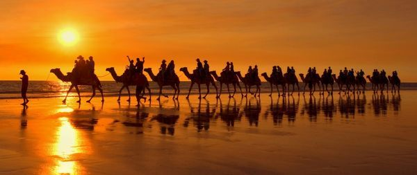 SAS-981 Camel safari - famous camel safari on Broom's Cable Beach at sunset with camels reflecting on wet beach