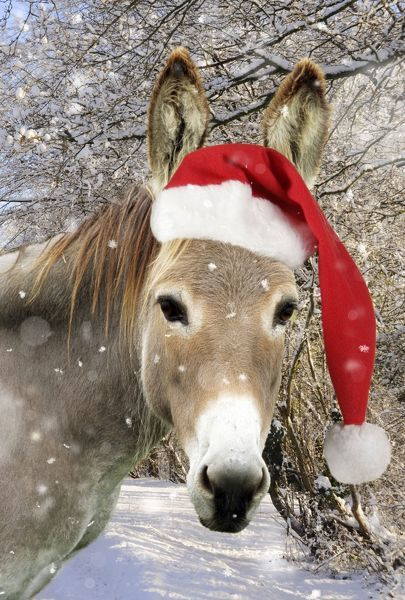 JD-15167-M Donkey - wearing Christmas hat in snowy scene Digitally Manipulated