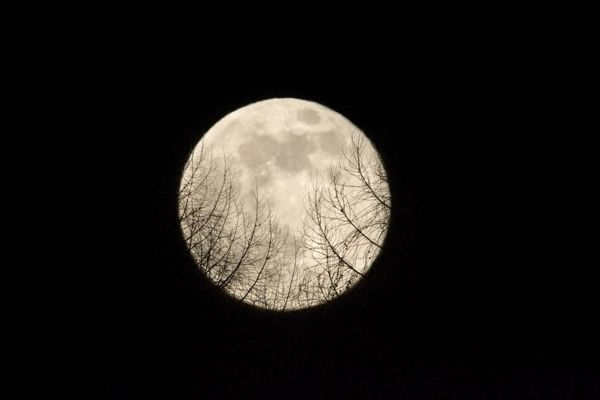 full moon rising over a forest