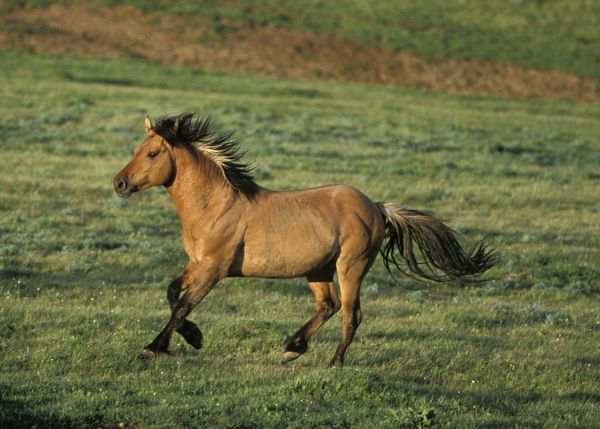 wildhorse singles & personals Wild horse dating seibert singles cope dating kit carson singles  colorado right now by signing up free or browsing through personal ads and hookup with someone .