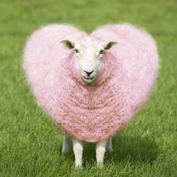 Sheep Ewe Pink Heart Shaped Wool Feu 158 M Sheep