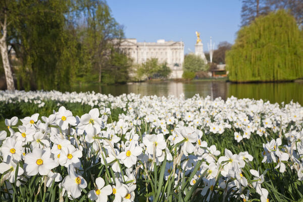 United Kingdom, London, View of Buckingham Palace from Green Park
