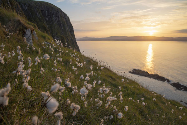 Cotton grass (Eriophorum angustifolium) growing on Garbh Eilean with the Isle of Lewis behind, Shiant Isles, Outer Hebrides, Scotland, UK. June