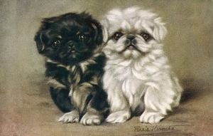 BLACK & WHITE PEKINGESE