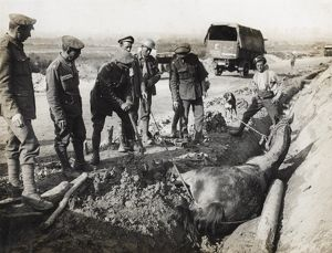 British soldiers rescuing horse from ditch, Flanders, WW1