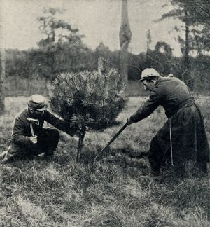 Christmas at the Front: Soldiers chopping down a tree 1914