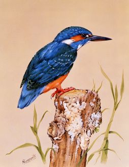 Kingfisher on a perch