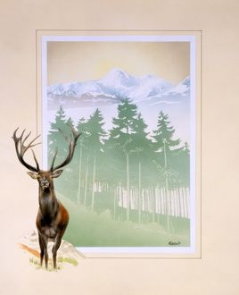 Large Red deer stag and mountainous woodland landscape