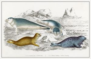 SEALS/ILLUSTRATION