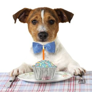JD-22300-M-C DOG. Jack russell terrier wearing bow tie sitting at table with Birthday cake