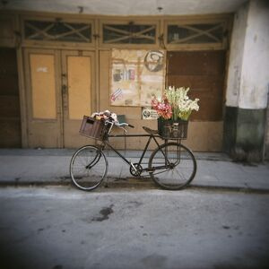 Bicycle with flowers in basket, Havana Centro, Havana, Cuba, West Indies, Central America