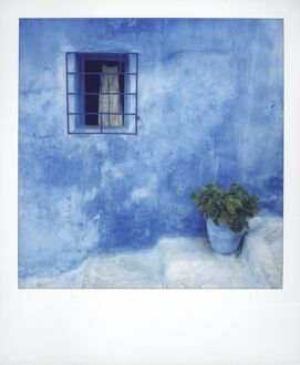 Polaroid of geranium in blue painted plantpot against bluewashed wall